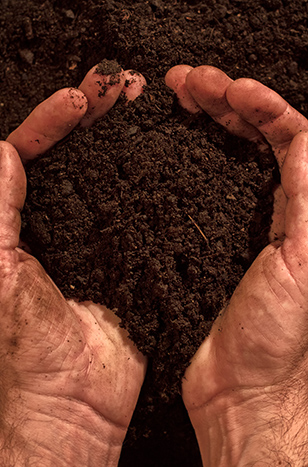 Fertile soil in dirty male hands